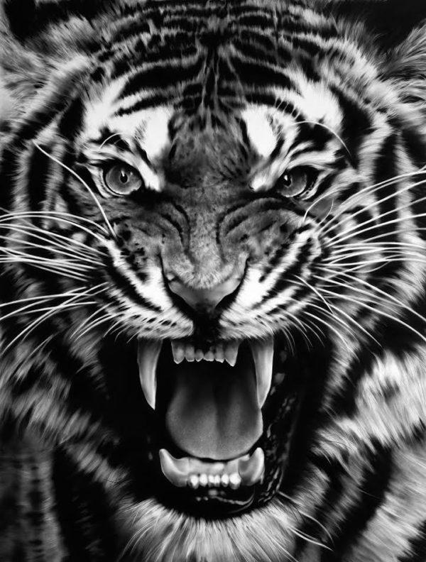 Robert Longo - untitled Roaring Tiger
